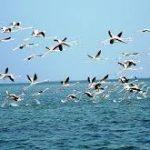 Odisha reports no case of bird flu till now