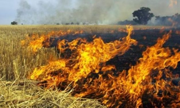 As farmers set fire to pest-attacked paddy fields in frustration, govt. seeks report from collectors