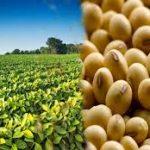 Odisha need to promote soybean this kharif: Union Agriculture Commissioner SK Malhotra