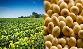 Odisha need to promote soybean this kharif: Union Agriculture Commissioner SK Malhotra