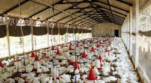 Thanks Delhi High Court, says Poultry Birtds