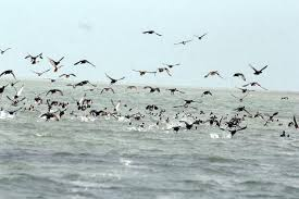 Chilika Bird Poaching: 2  arrested, 13 birds seized