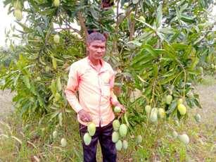 Koraput tribals export mangoes to Delhi, Vizag
