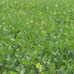 Odisha agril. min. Arun Sahoo unveils Rabi Programme, targets 14.31 lakh hectares coverage under pulses