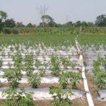 Netafim India launches FlexNet™ to boost genext farming