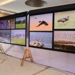 National Chilika Bird Festival takes flight
