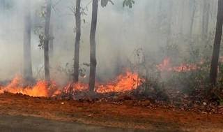 Centre sends experts team to manage forest fires in Odisha