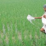 Cabinet approves NBS rates for P&K fertilisers for FY22