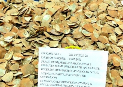 Central wildlife protection squad seized Pangolin scales
